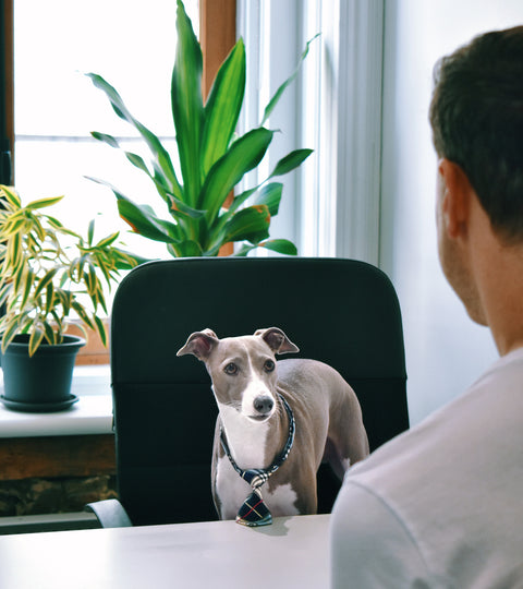 Benefits of a pet-friendly office