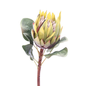 Green & Burgundy King Protea