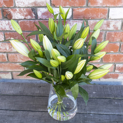 White Fragrant Lilies