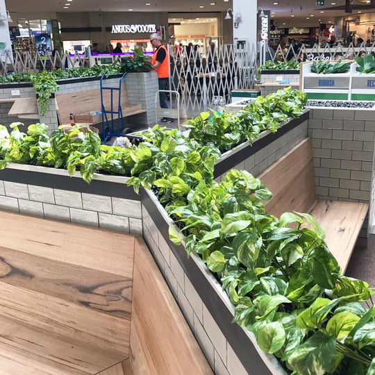 Food Court Planter Boxes