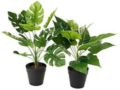 fake plants you can buy online