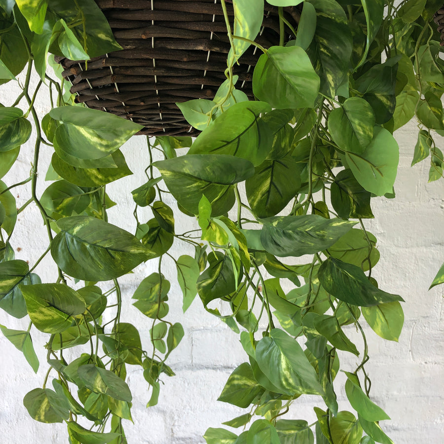 Large Pothos Hanging Baskets