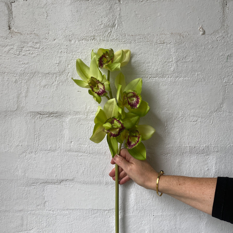 Real Touch Orchid Phalaenopsis + Cymbidium Stems (Artificial)