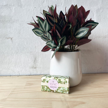 Aus Wide Gift Delivery | Faux Plant + Soap