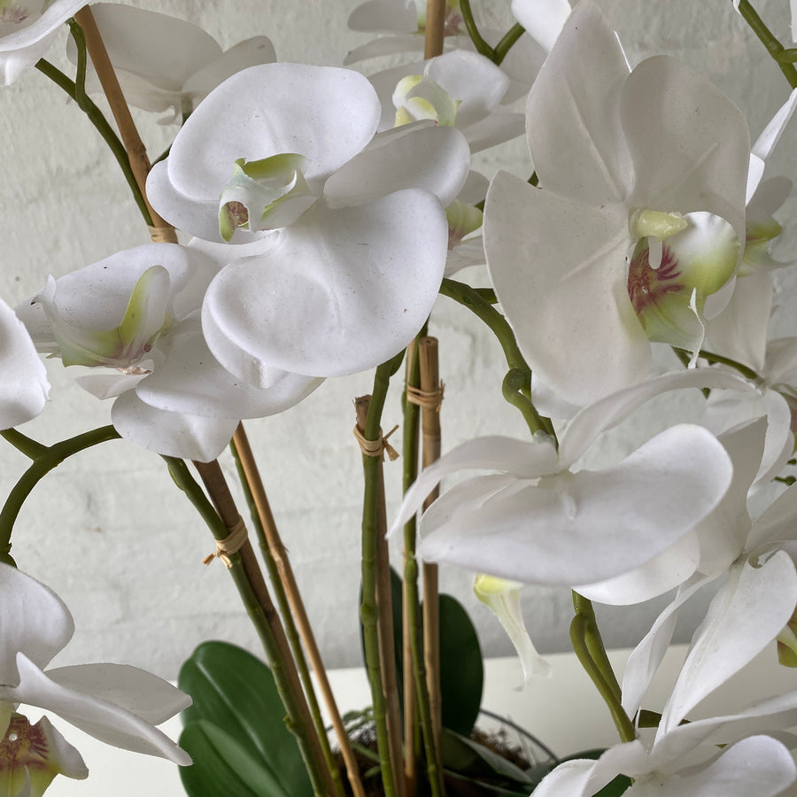 Artificial Large White Orchids in Glass