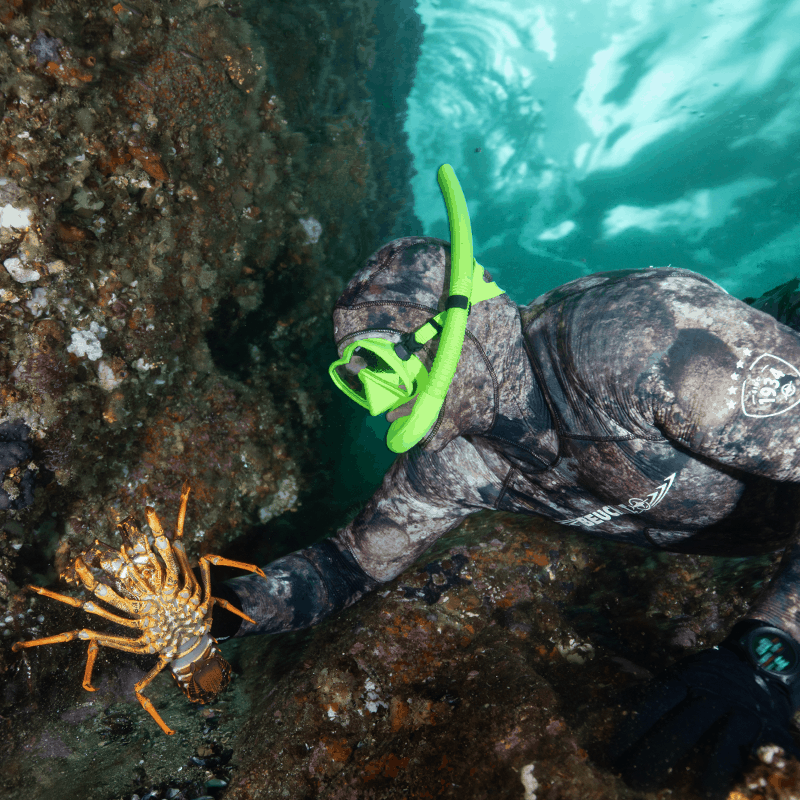 Beuchat Rocksea Competition Wet Suit and Maxlux mask with Spy Snorkel on Free Diver catching a cray fish