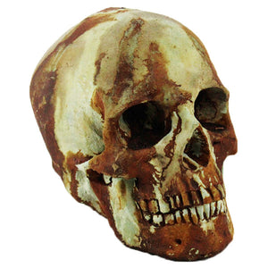 Skull home and garden statues