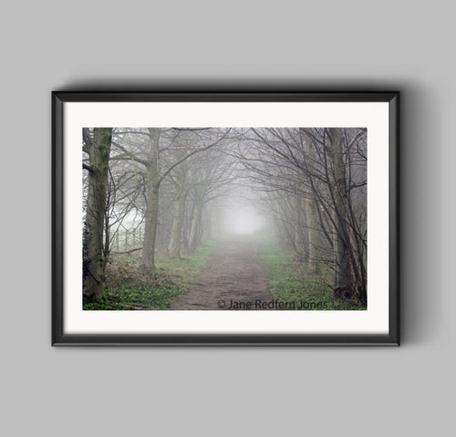 Big Wood, Erddig, in the mist