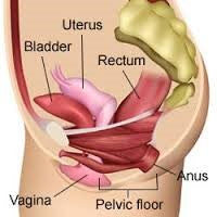 Pelvic Floor Health - Workshop
