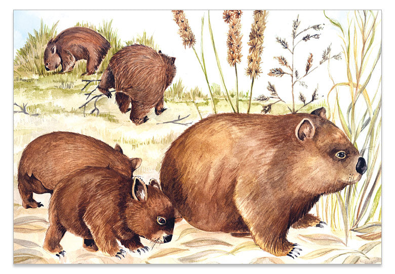 Wombat Family A6 Art Card