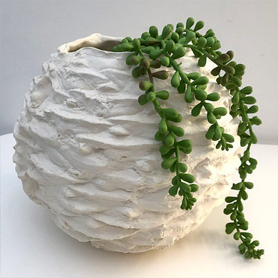 Bunya Nut - Ceramic Sculpture, Porcelain Vase, Australian Native