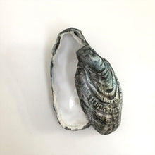 Lidded Oyster