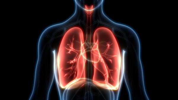 Lung Immunity Support Probiotic Positive anti-inflammatory Results