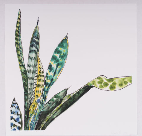 Katie French Perez Snake Plant Art Print (no. 1)