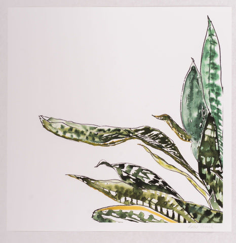 Katie French Perez Snake Plant Art Print (no. 2)