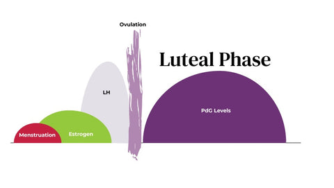 progesterone luteal phase womans cycle