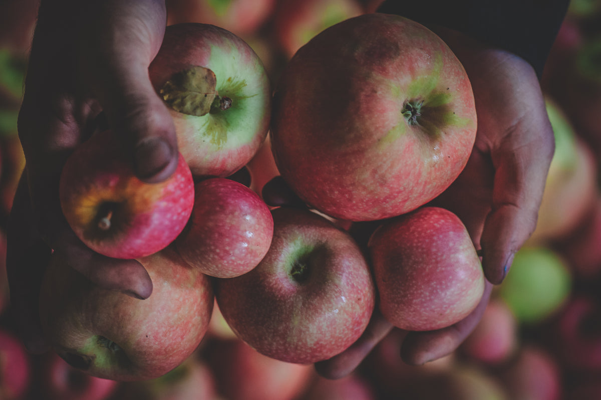 How do you like them apples: The cider making process