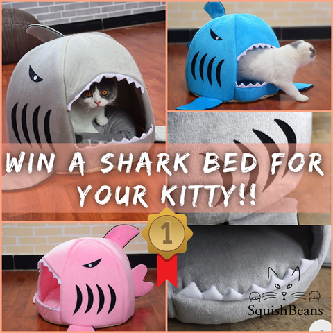 SquishBeans Shark Bed Competition