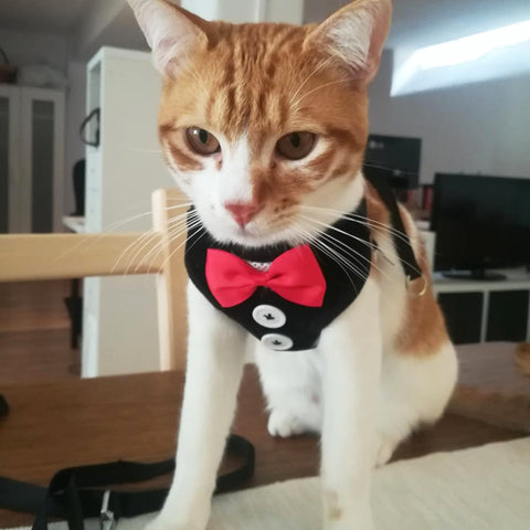 Tuxedo Harness/Leash Set - squishbeans
