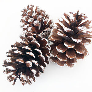 Tray Decor - Frosted Pine Cones (Set of 3)