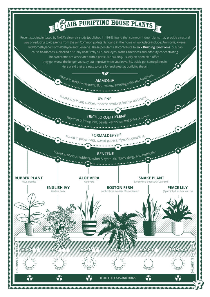 Air purifying plants infographic