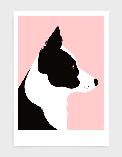 A black and white border collie dog head in profile against a pink background