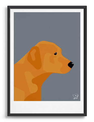 Framed modern dog print of a fox red labrador in profile against a dark grey background