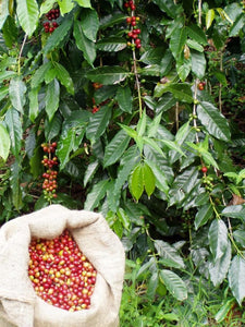 Why Single-origin Coffee is Better for You