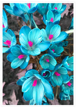 Load image into Gallery viewer, Crocus Blue Flower Art Print not in a frame