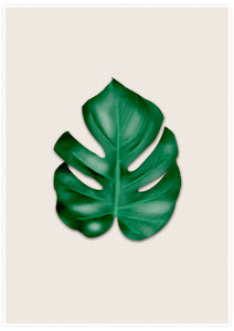 Simple and natural Monstera Leaf Art Print