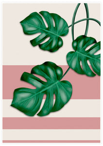 Pink Monstera Deliciosa Print with white border