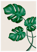 Load image into Gallery viewer, Monstera Print with white border