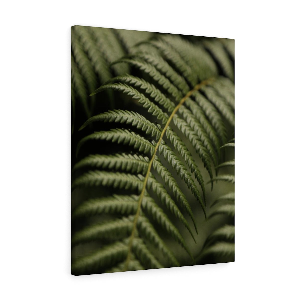 Hawaiian Leaf - Canvas