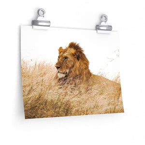 Lion King - Wide Print