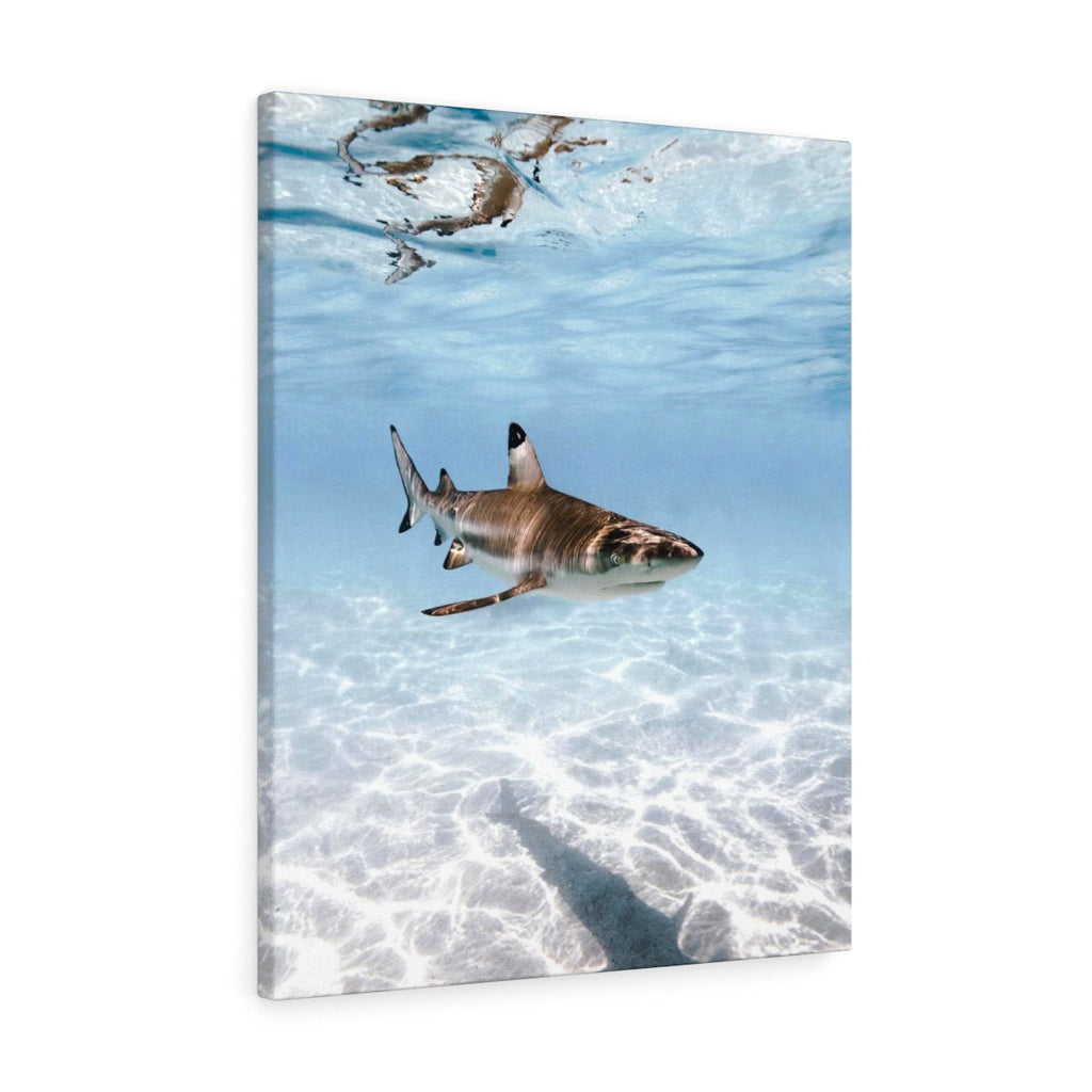 Blacktip Reef Shark Tahiti - Canvas
