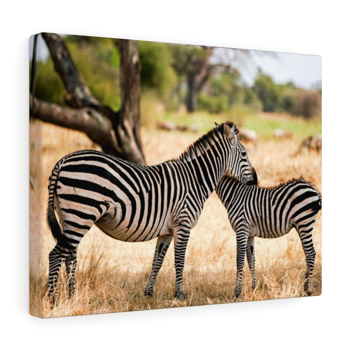 Zebra Hug - Canvas