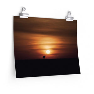 Wildebeest Sunset - Wide Print