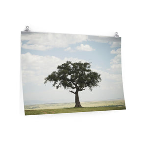 African Lone Tree - Wide Print