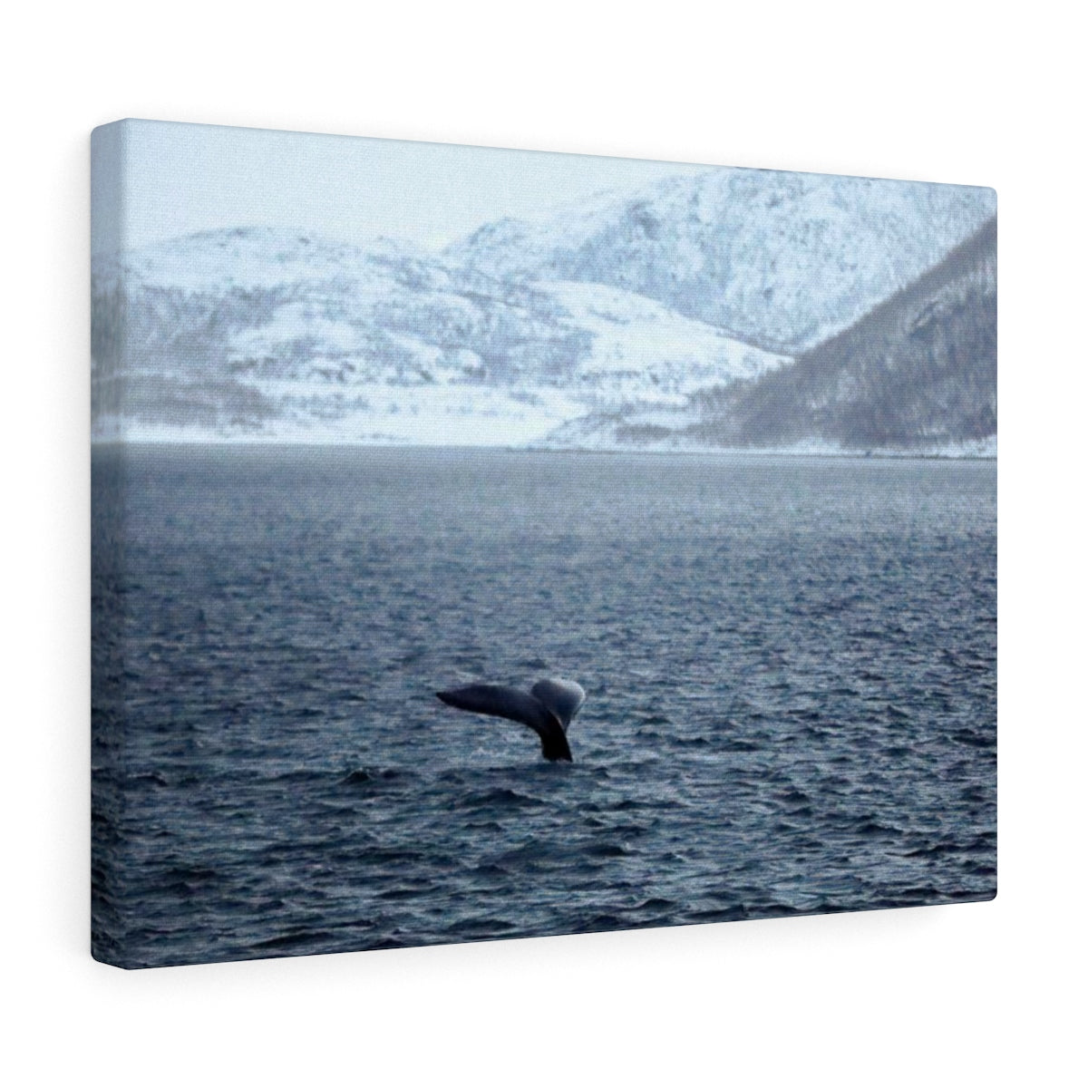 Norway Whale - Canvas