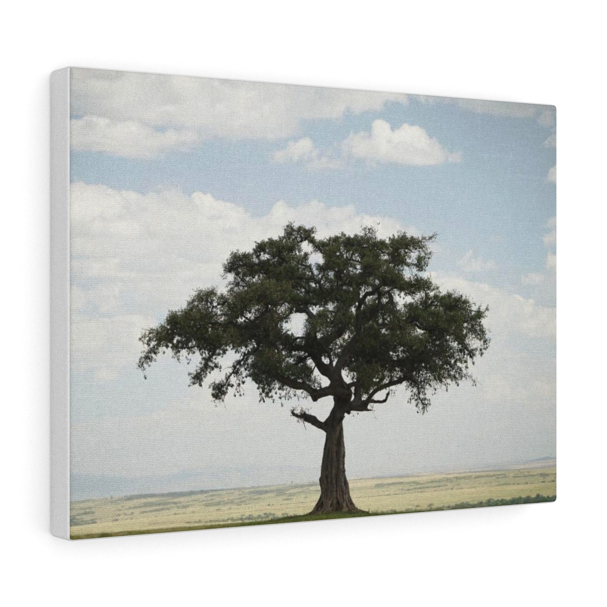 African Lone Tree - Canvas