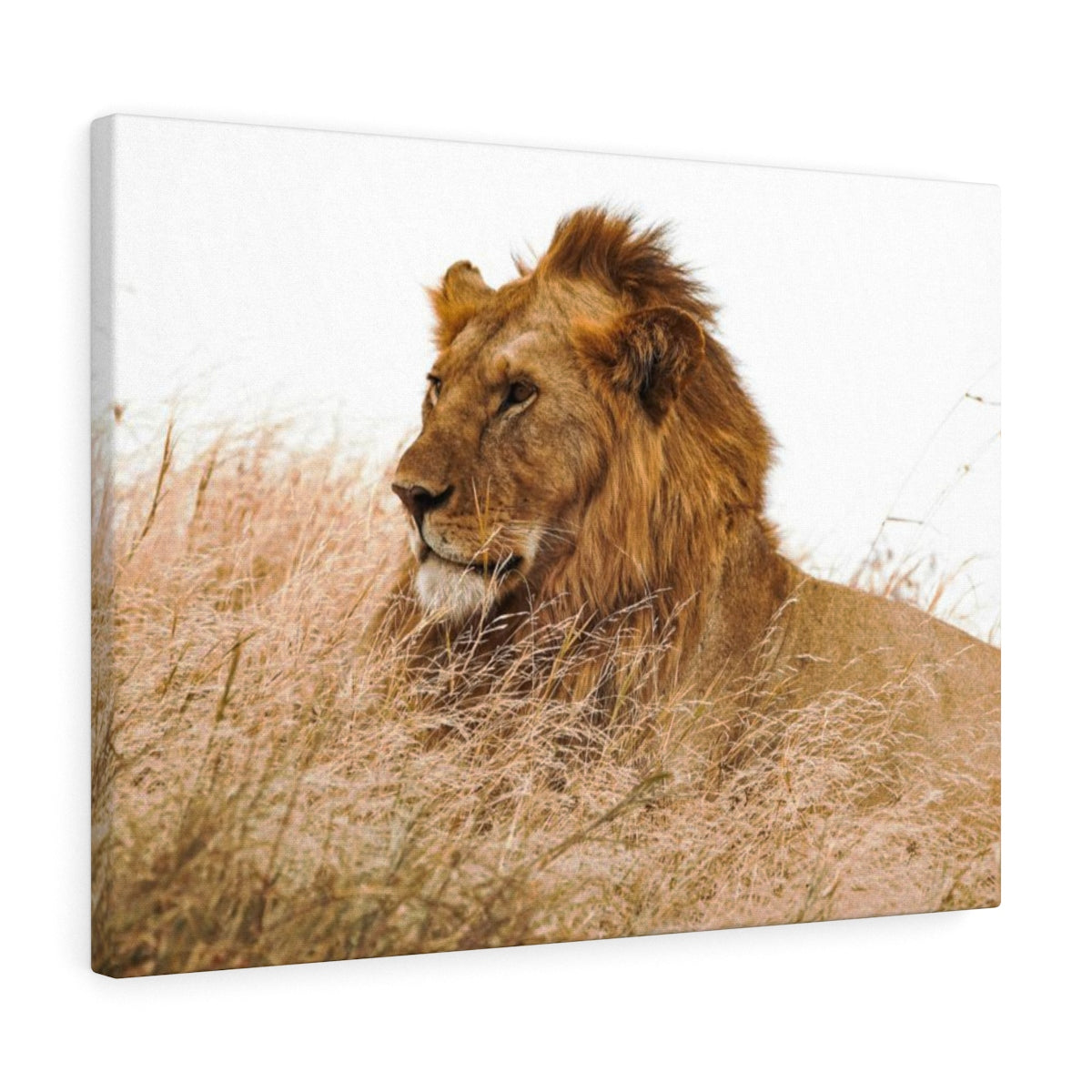 Lion King - Canvas