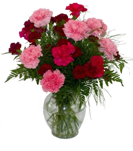 Carnation vase - TCS Sentiments Express