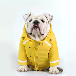 WONTON Mr. Fahrenheit Jacket in Yellow (Limited Edition) - WontonCollection