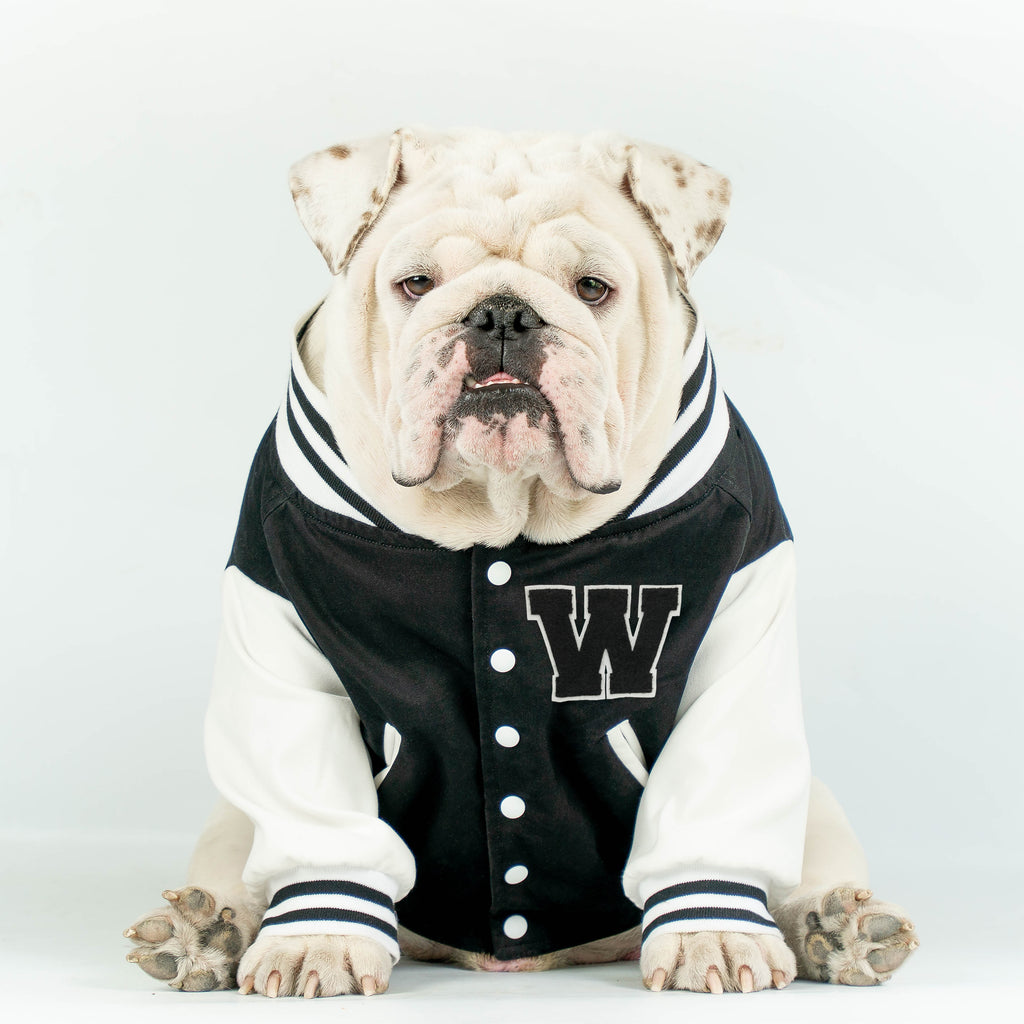 WONTON VARSITY BOMBER Jacket in black (Customizable Chest Letter) - WontonCollection