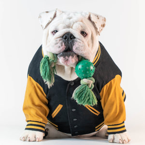 WONTON VARSITY BOMBER Jacket in black and yellow (Customizable Chest Letter) - WontonCollection