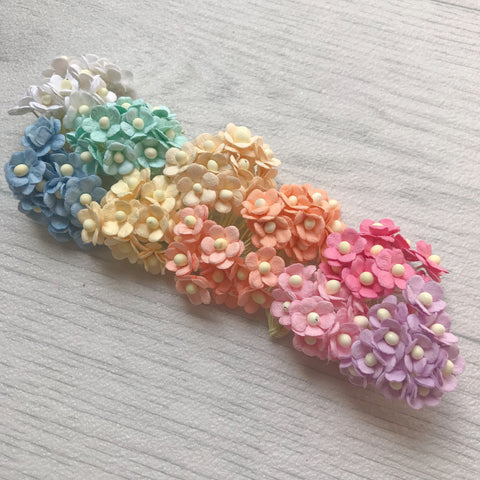 Mulberry Miniature Sweetheart Bloom Rainbow Pack PRESALE