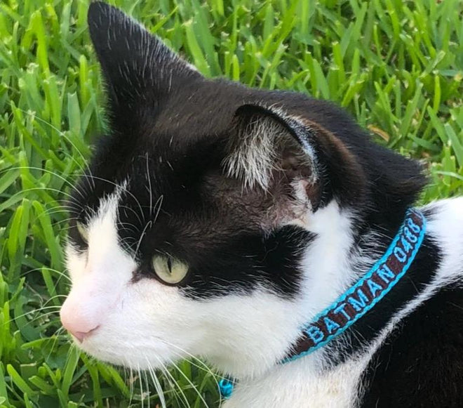 Cat Collars - Leashes - Harnesses