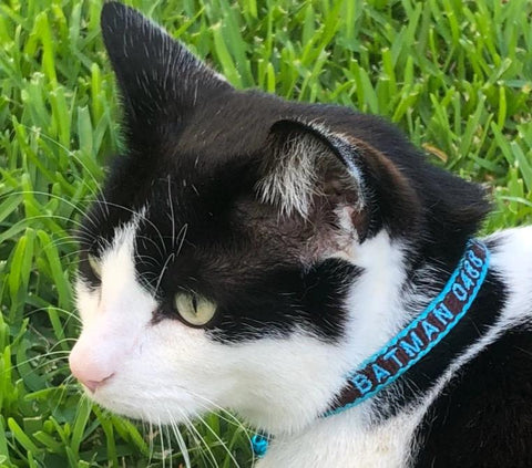 Cat ID Collar Bamboo Fibre Personalised Embroidered