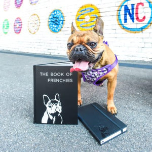 French Bulldog Coffee Table Book – The Book of Frenchies