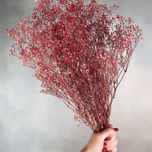Pink Preserved Baby's Breath-Nine Zen
